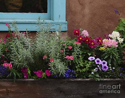Poster featuring the photograph Window-box II by Sherry Davis