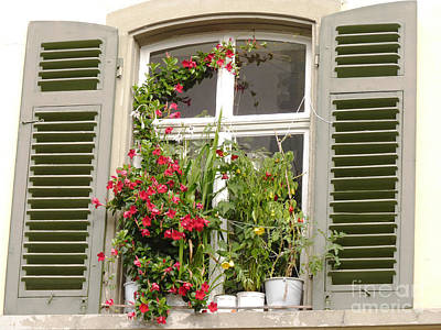 Window With Flower Pots Poster
