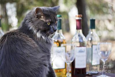 Wine Tasting Cat Poster by Nan Moore