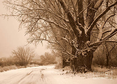 Winter Country Road Poster by Carol Groenen