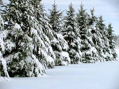 Winter Elegance Poster