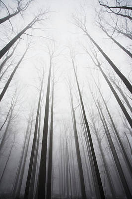 Winter Forest In Mist Poster by Jack Flash