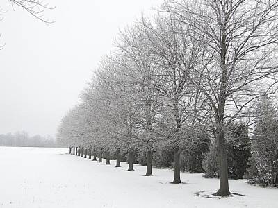 Winter Hoar Frost On Trees Poster