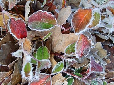 Winter Leaves Poster