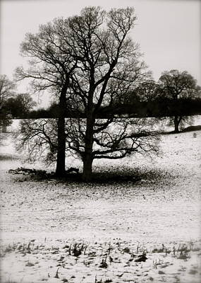 Poster featuring the photograph Winter Oaks by John Colley