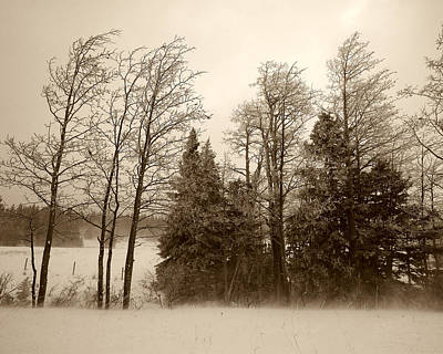 Poster featuring the photograph Winter Treeline by Hugh Smith