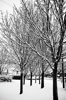 Winter Trees Poster by Chris Barber