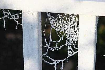 Poster featuring the photograph Winter Web Number Two by Paula Tohline Calhoun