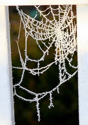 Poster featuring the photograph Winter Web by Paula Tohline Calhoun