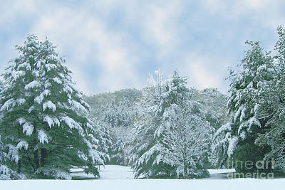 Poster featuring the photograph Winter Wonderland In The South by Michael Waters