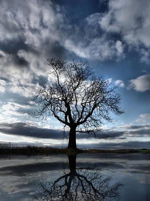 Wintering Oak Tree Poster