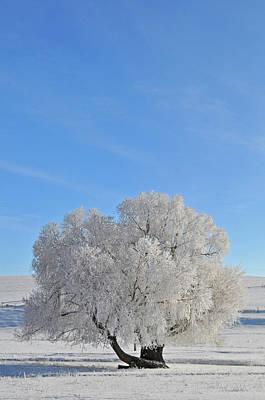 Winter's Coat In Montana's Gallatin Valley Poster