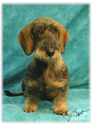 Wire Dachshund Pup Poster