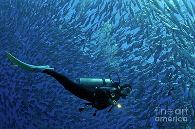 Woman Diver Surrounded By A School Of Jackfish Poster by Sami Sarkis