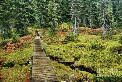 Wooden Foot Bridge Over Stream Poster