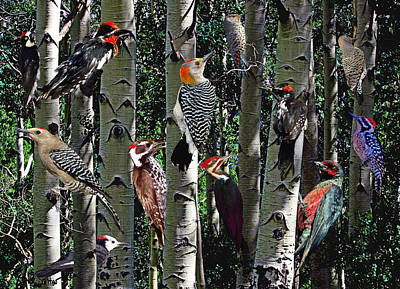 Woodpecker Collage Poster
