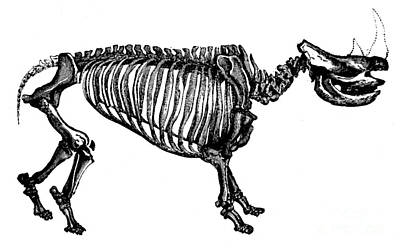 Woolly Rhino, Cenozoic Mammal Poster
