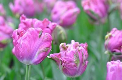 Wrinkled Flowers Poster