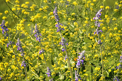 Yellow And Blue Wildflowers Poster