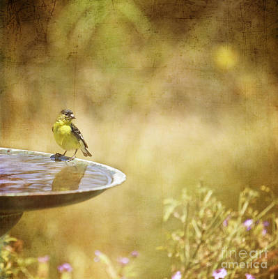 Yellow Bird Upon A Fountain Poster
