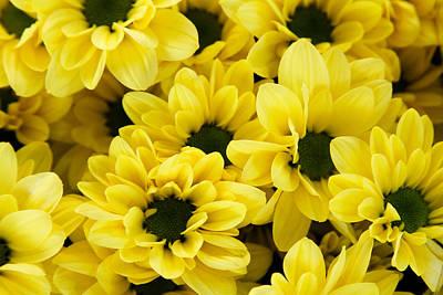 Yellow Daisy Garden Poster by Tony Grider