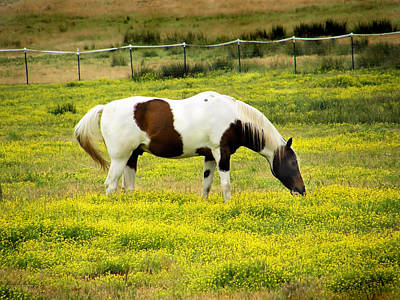 Yellow Fields Horse Poster