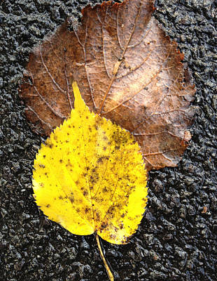 Yellow Leaf In Rain Poster by Shirin Shahram Badie