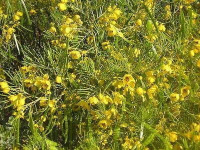 Yellow Mesquite Poster