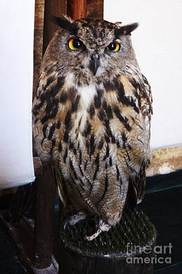 Yellow Owl Eyes Poster