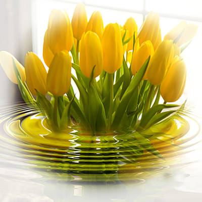 Yellow Tulips Poster by Trudy Wilkerson