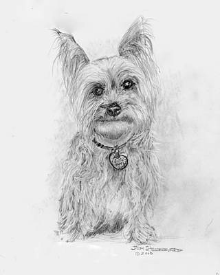 Poster featuring the drawing Yorkshire Terrier by Jim Hubbard