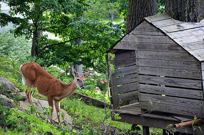 Poster featuring the photograph Young Buck At Treehouse Hopatcong by Maureen E Ritter