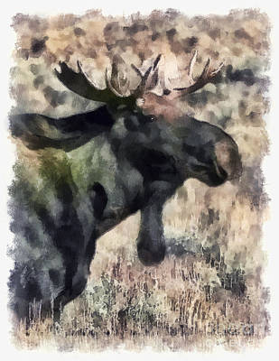 Young Bull Moose Poster by Clare VanderVeen