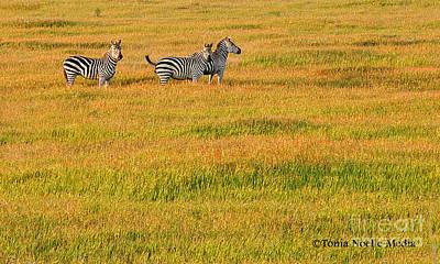 Zebras Poster by Tonia Noelle
