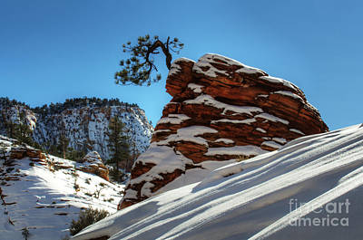Winter Magic Zion National Park Poster