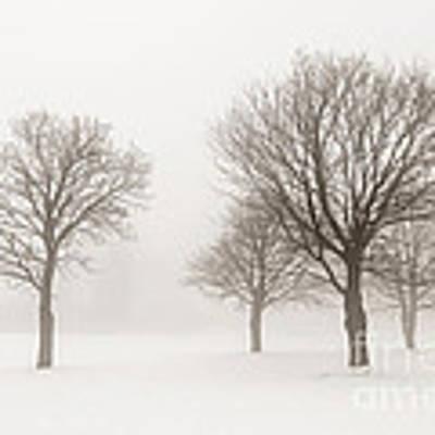 Winter Trees In Fog Poster