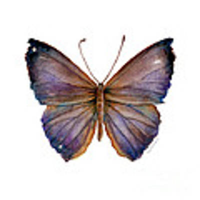18 Purple Pandemos Butterfly Poster by Amy Kirkpatrick