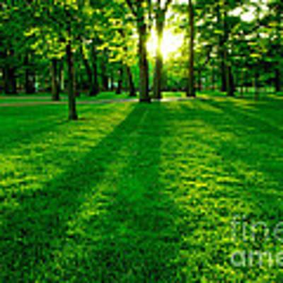 Green Park Poster by Elena Elisseeva