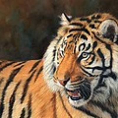 Amur Tiger Poster by David Stribbling