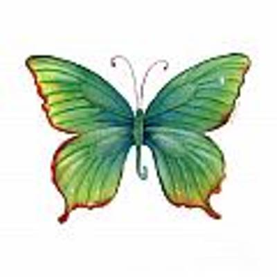 74 Green Flame Tip Butterfly Poster