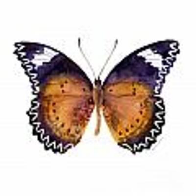 87 Cethosia Cyane Butterfly Poster by Amy Kirkpatrick