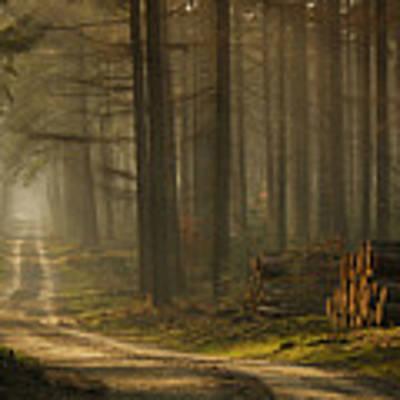 A Forest Walk Poster by Jan Paul Kraaij
