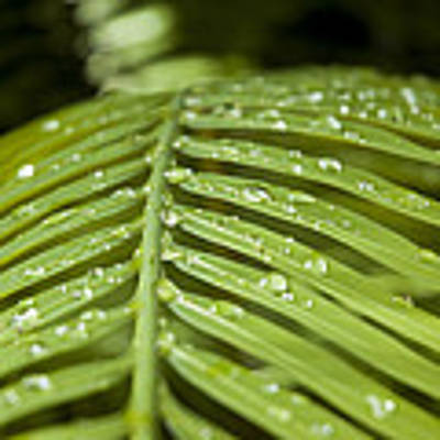 Bending Ferns Poster by Carolyn Marshall