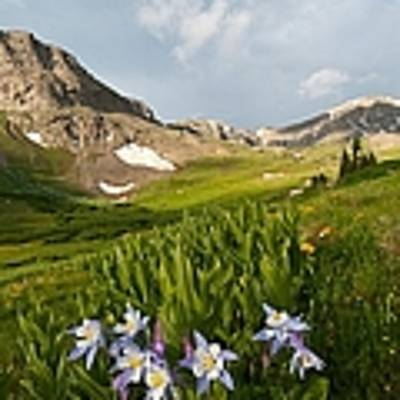 Handie's Peak And Blue Columbine On A Summer Morning Poster by Cascade Colors