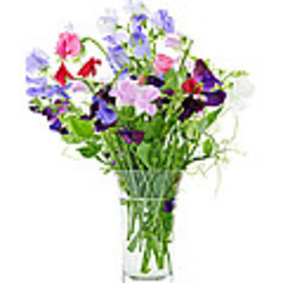 Bouquet Of Sweet Pea Flowers Poster
