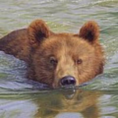 Brown Bear Painting Poster by David Stribbling