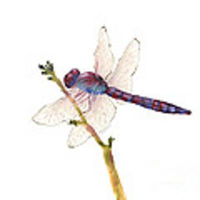 Burgundy Dragonfly Poster