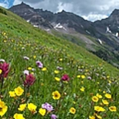 Colorado Wildflowers And Mountains Poster by Cascade Colors