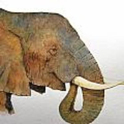 Elephant Head Study Poster