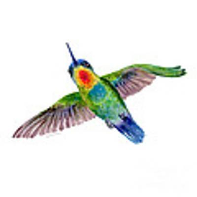 Fiery-throated Hummingbird Poster by Amy Kirkpatrick